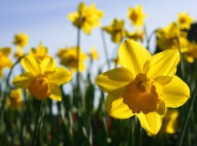 Spring has sprung, so too have our grants